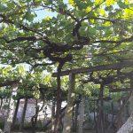 Viñas-Furancho-Tizon