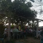 Terraza-Furancho-Palmera