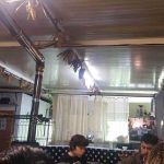 techo-furancho-judas